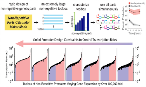Infographic showing non-repetitive genetic parts for engineering organisms.